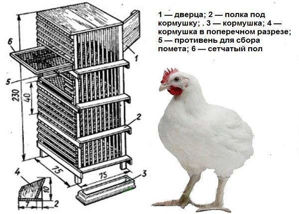 Самодельный брудер для цыплят
